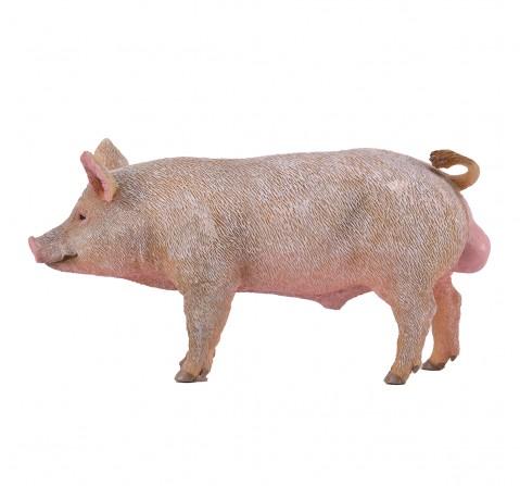 Collecta -Boar animal figure, 3Y+